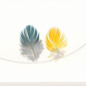 Papagei & Papagei